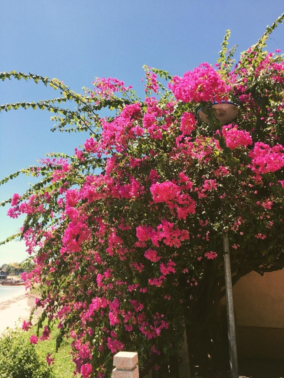 Цветущее дерево Вьетнам