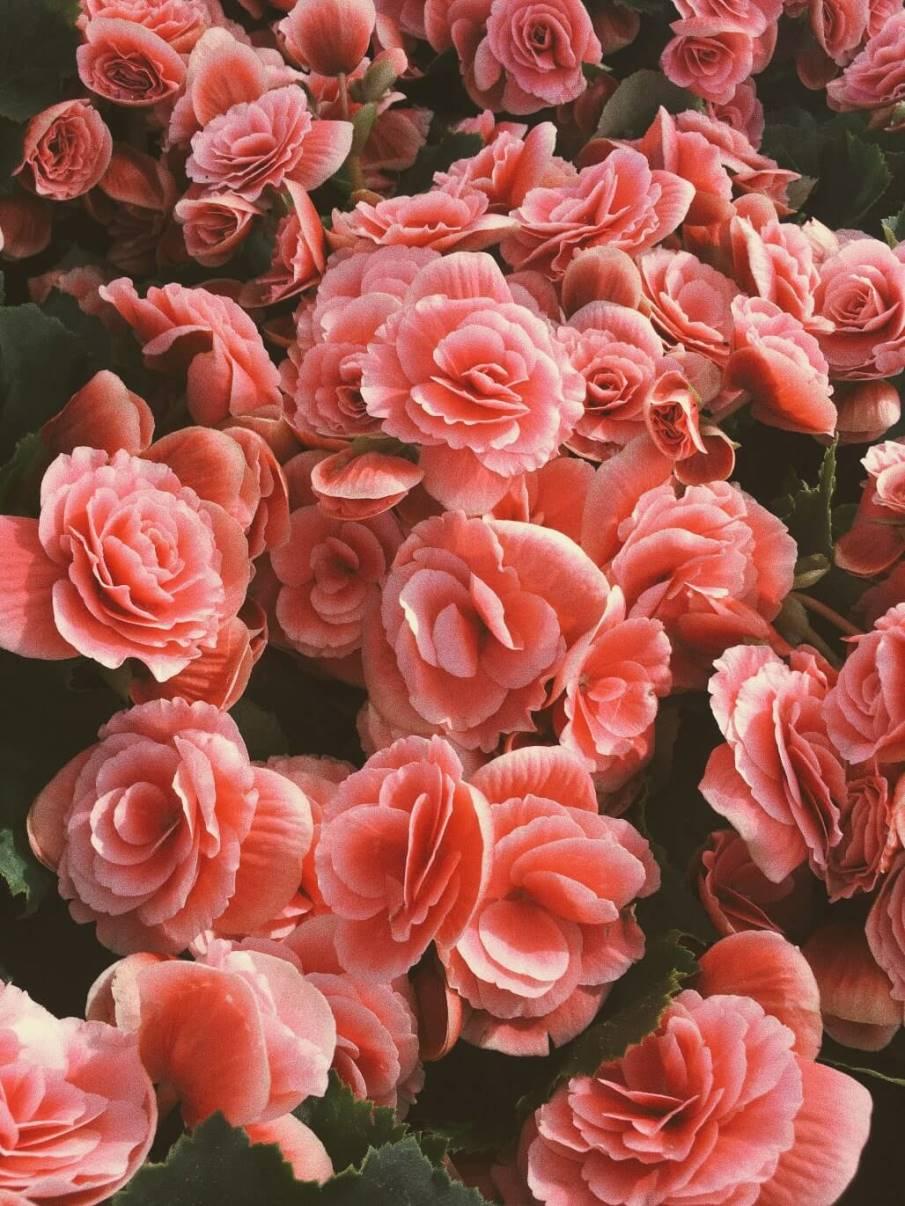 Цветы в Vinpearl Land Вьетнам