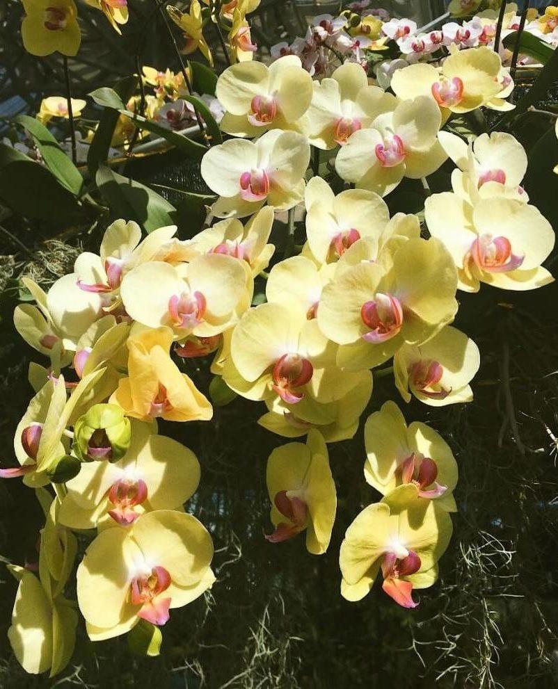 Цветы орхидеи в Vinpearl Land Вьетнам