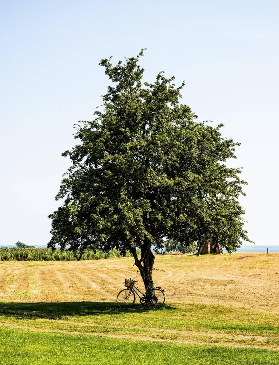 Дерево в поле и велосипед